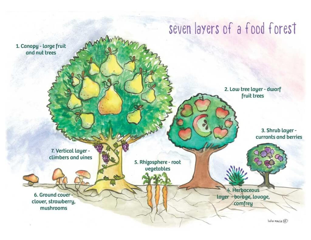 Basic architecture of a food forest, displayed on site