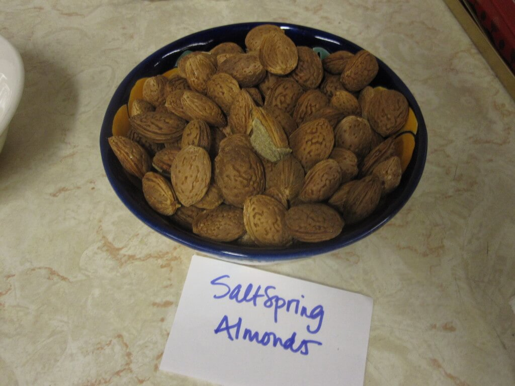 Local almonds grown on Salt Spring bring possibilities to the senses of the stakeholders