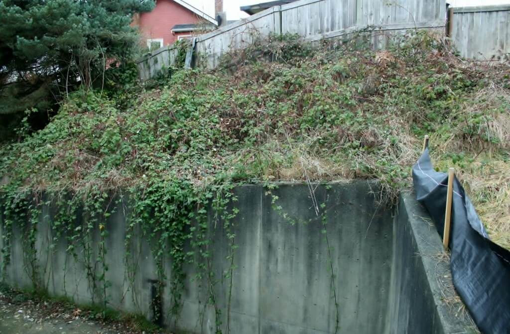 Before: A tangled, steeply sloped bank between two parking lots
